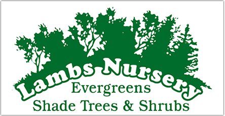 Lambs Nursery In Muskego Wi Shade Trees Evergreens