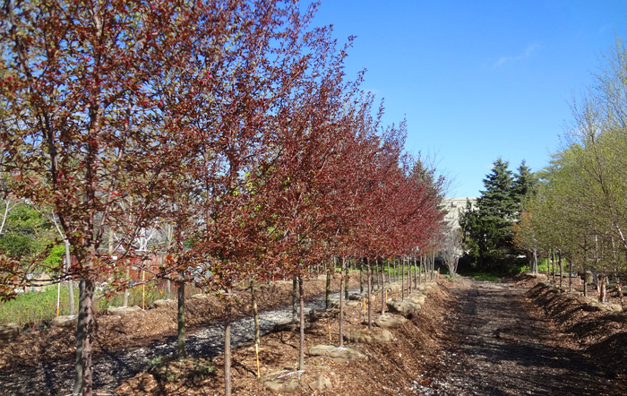 Landscaping Bushes For Wisconsin : Wi shade trees evergreens shrubs landscaping and construction